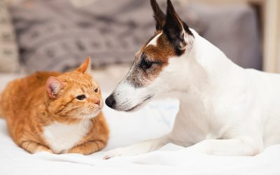Caring For Our Pets is your online resource for information about parasites that can impact the health of your pet.